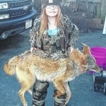 Young coyote harvester