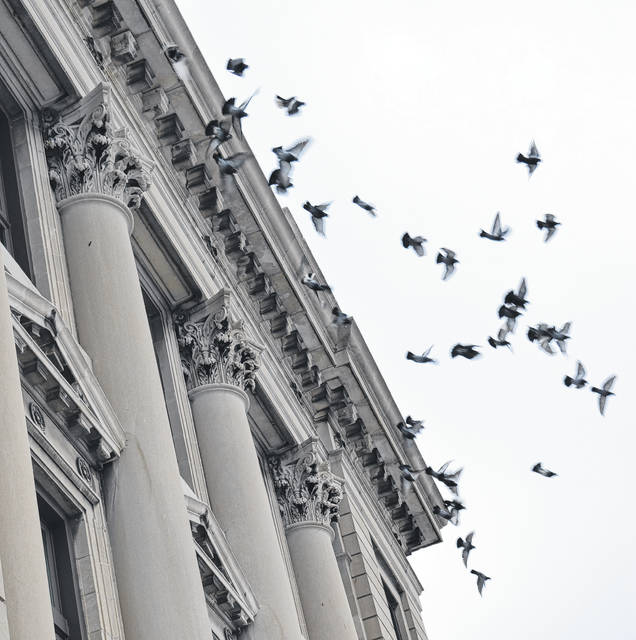 County commissioners on Monday approved a work project to stop pigeons from roosting on the courthouse.