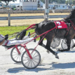 Pacing themselves: Trotters at the fair